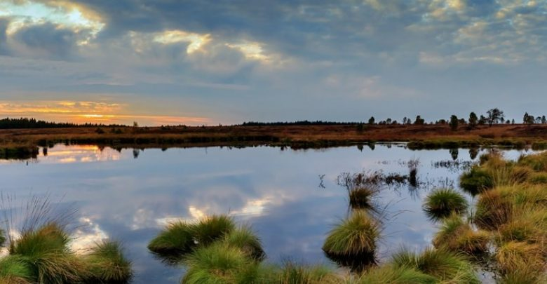 Los humedales garantizan la biodiversidad.